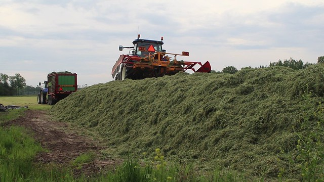 Early  This  Morning,  Silage  is  Safe !
