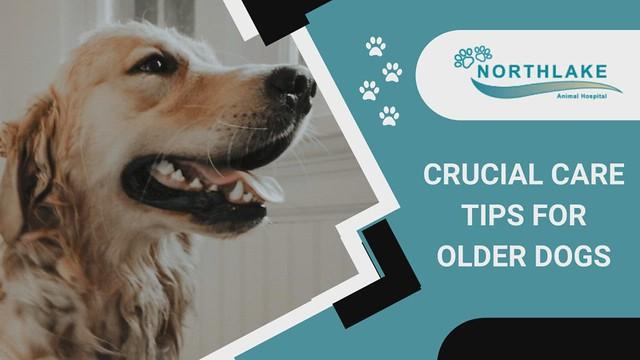Personalized Senior Pet Care Service