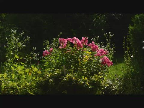 Blumen Sommerwind Katze