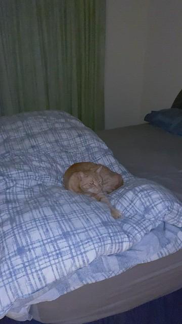 IMG_7312 Sleepily purring
