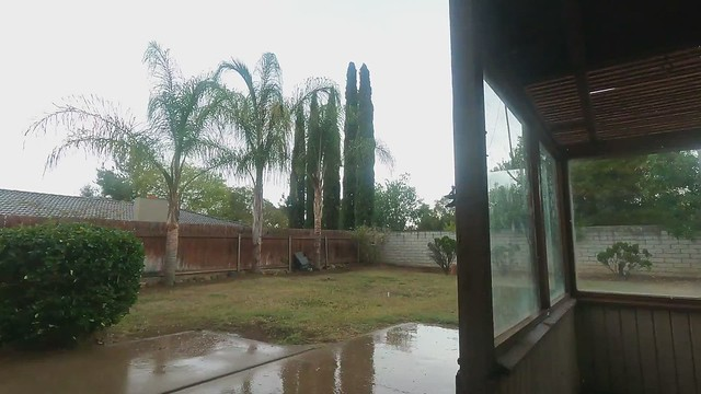 Dog Rain And Thunder 8-29-21 (2)