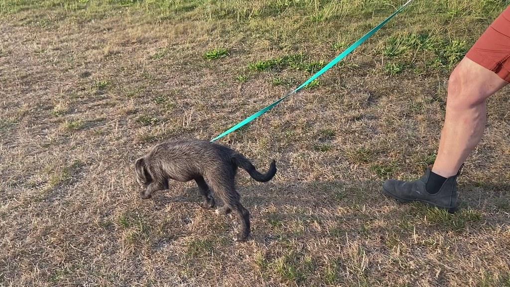 Bobbi   First Walkies