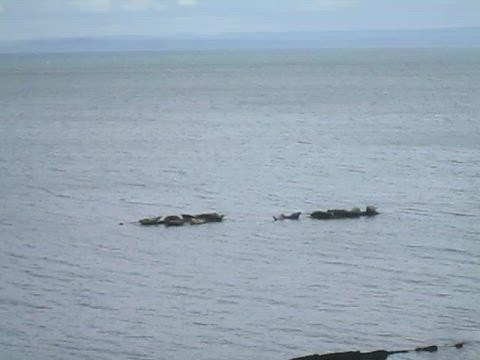 Video of Seals Seals at Seafield, Kirkcaldy