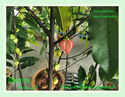 TÌNH YÊU CÂY CỎ  - Page 21 2557837049_b062556bf6