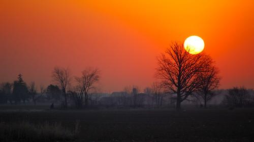 ontario canada tree fog sunrise landscape nikon d40 explored cans2s beautifulgladyoupostedit