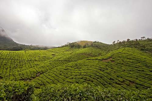 trip vacation mountain cloudy tea may myfav kerala plantation 2008 southindia munnar idukki kolukkumalai canon40d keralatrip2008