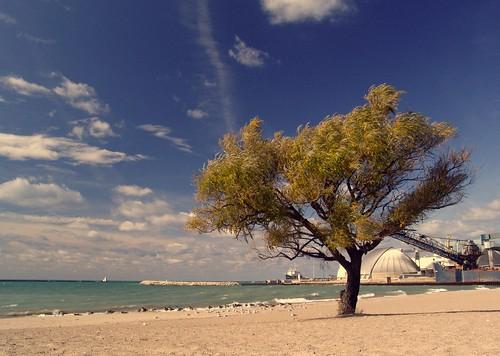 ontario canada tree beach sand lakehuron goderich