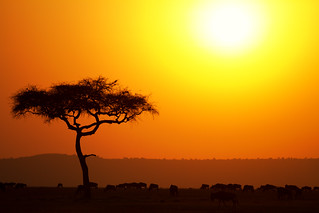 Sunset Over The Mara   by The.Rohit