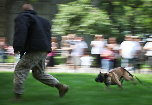 Dog chases and bites Marine at Marine Day Times Square - Fleet Week New York 2011 | by NYCMarines