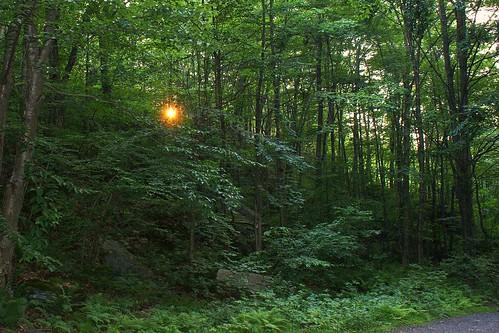 railroad sunset sun forest photography sony well pa trail gravity valley series 300 alpha dslr carbondale 2008 lackawanna artesian a300 α dslra300 α300 dslra300k αlpha dslrα300 dslrα300k