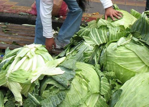 giant cabbages | by Vilseskogen