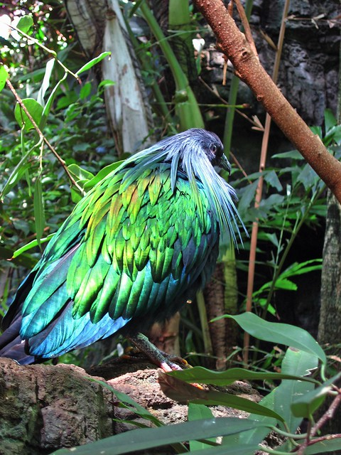 Bright Green Bird, Central Park Zoo, New York