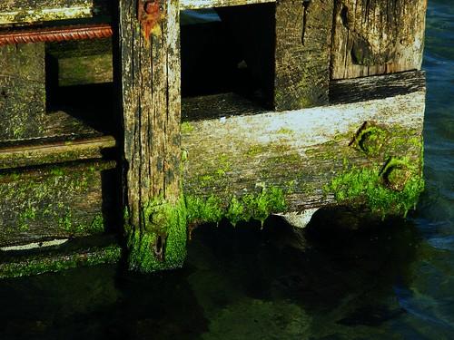 Slime | by geyergus