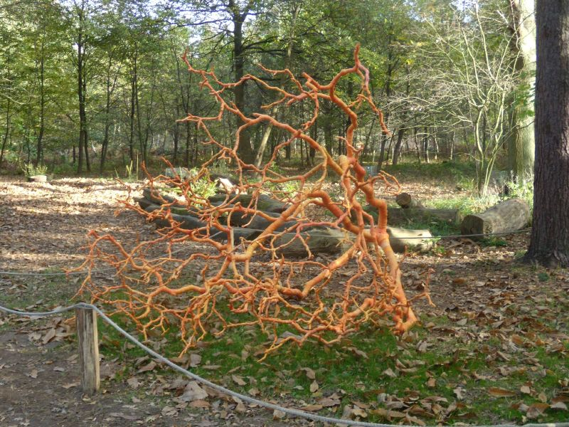 Tree sculpture. Winksworth Arboretum. Milford to Godalming