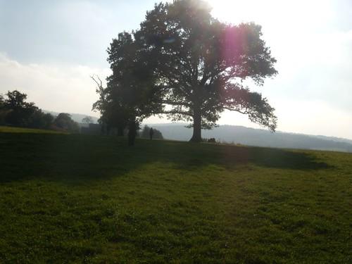 Past a tree Cowden to Eridge