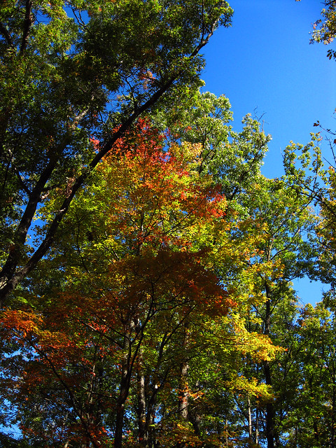 Fall Colors, Twin Arches Trail, Big South Fork NRRA, Scott Co, TN