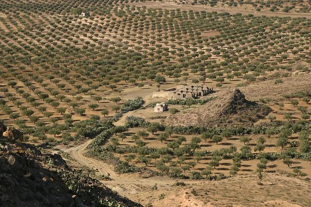 Sejour en Tunisie - 2007