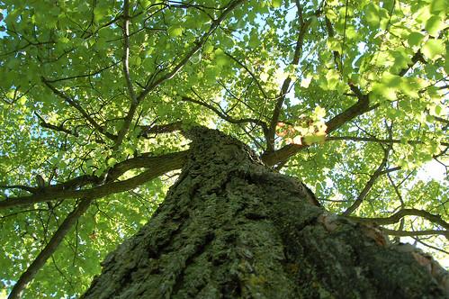 tree green nature