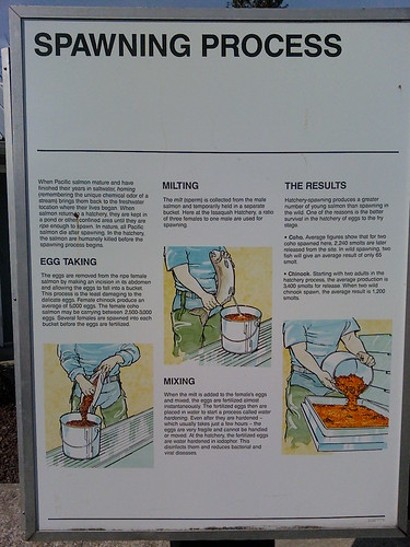 Salmon Hatchery display | by noromdiam
