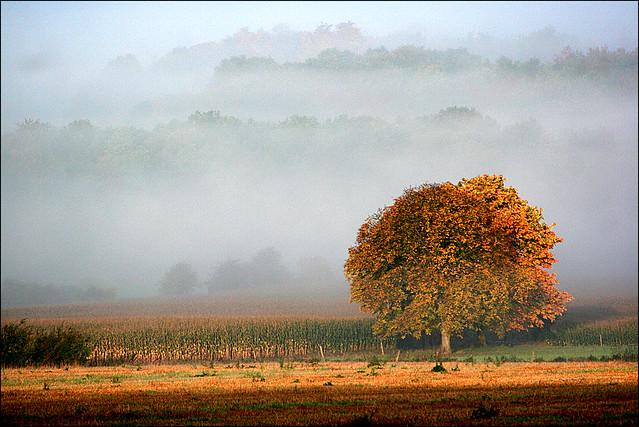 Réveil brumeux 4. - Foggy awakening.