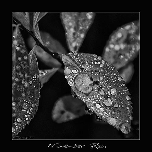 november bw white black blur water leaves rain photoshop shower blackwhite leaf drops nikon bokeh adobe dew droplet d200 grayscale nikkor lowkey gunsnroses gnr axlrose cs3 cs4 novemberrain 18200mmvr hbw doyouthinkyouhaveenoughtags niksoftware davidsaunders happybokehwednesday silverefexpro davethehaligonian nkn8466nef maybeacouplemorewouldhelp neverenoughtagsnancy feelfreetoaddfunnyones