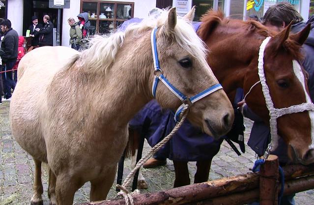 Leonberger - Pferdemarkt
