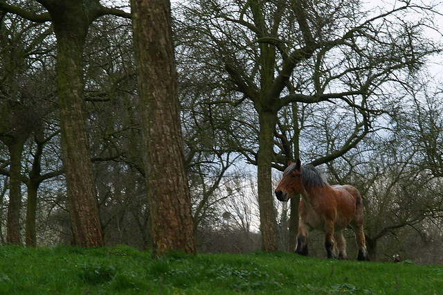 Oude knol - worn out horse
