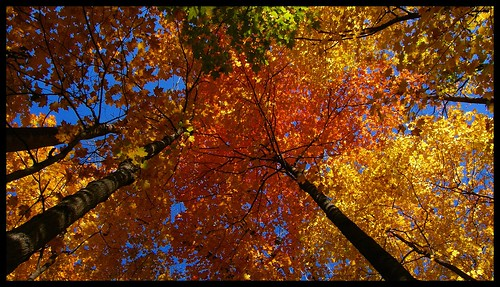 blue autumn red orange fallleaves green fall colors yellow wisconsin fallcolors foliage karma seagate fallintoautumn abigfave itsabeautifullife thebeautyofnature aplusphoto elpasojoes freenature damniwishidtakenthat photographersgonewild natureandnothingelse
