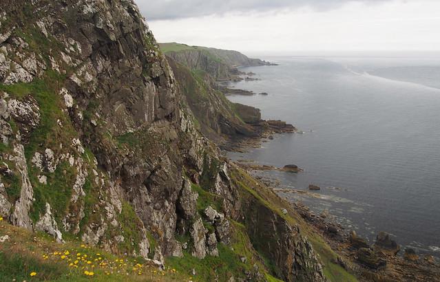 The coast west of St Abbs Head
