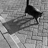 cat + shadow