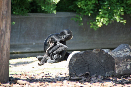 Monkeys at Aalborg Zoo   by Ullisan