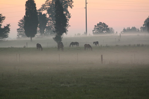 horses field fog sunrise nc pasture catawbacounty