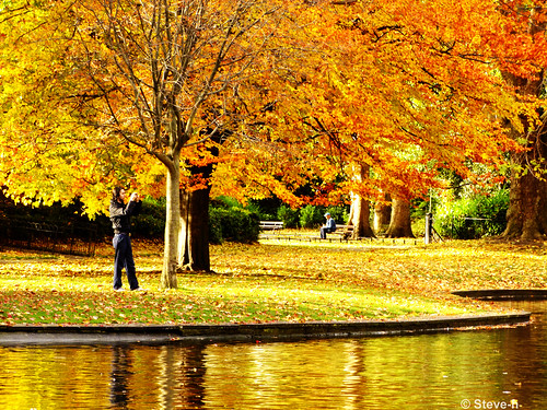 autumn trees ireland dublin orange green leaves yellow reflections bench golden europa europe eu finepix fujifilm bushes duckpond ststephensgreen steveh anotherphotographer superaplus aplusphoto theunforgettablepictures platinumheartaward theperfectphotographer s100fs favemoifrance