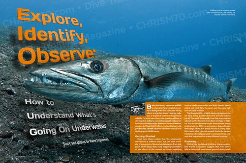 fish magazine spread graphicdesign underwater view scuba diving explore observe type barracuda identify divetraining chrism70
