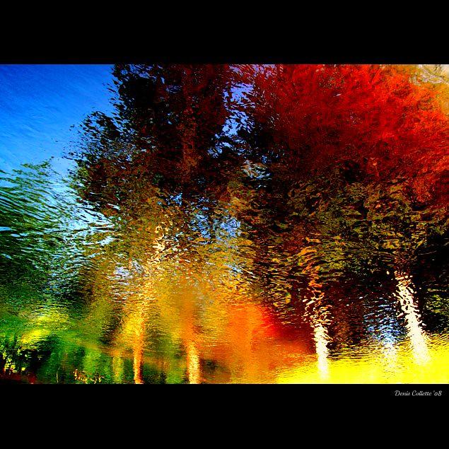 Enchanted forest in my wild river...!!! / Forêt enchanté dans ma rivière sauvage...!!!