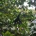 Uganda / Kalinzu Forest Reserve
