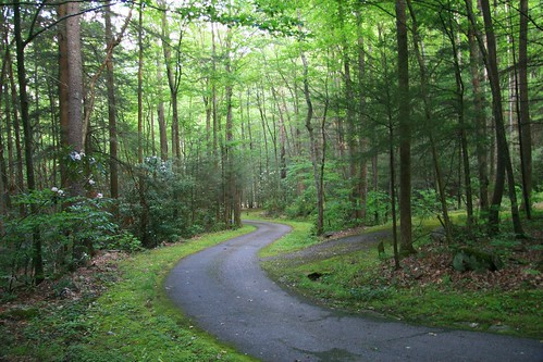 road flowers camping trees forest geotagged quiet tennessee campground basecamp roundmountain