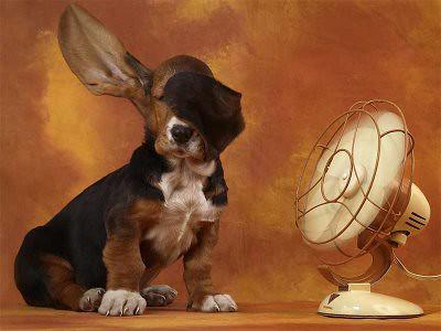 perro-calor-ventilador