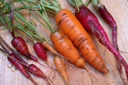 Carrots from the garden | by allispossible.org.uk