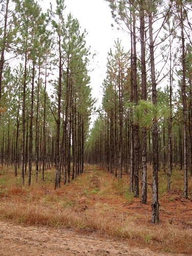 trees georgia agriculture recovery silviculture