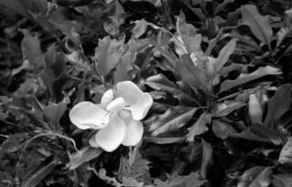 flower | by hartlaubduck