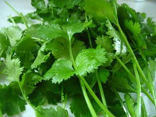 Garden fresh cilantro   by Qfamily