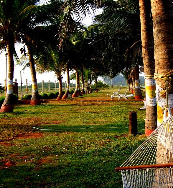 The Pondicherry Ashok