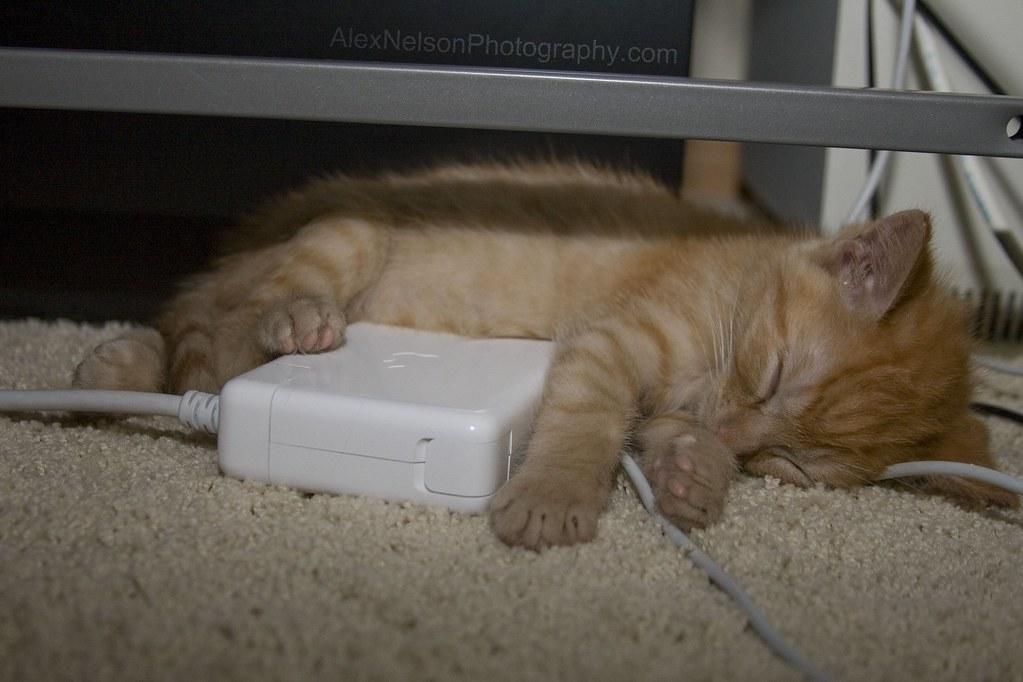 kitten sleeping under a desk on a computer charger box