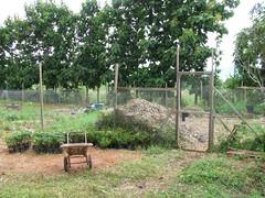 20080722_18_Our permaculture farm   by MissManda