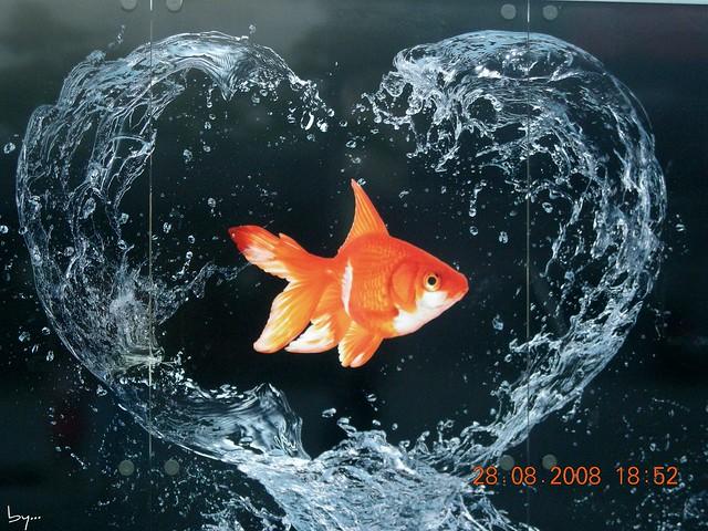 Corazón de pez