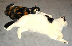 Chloe and Fat Cat