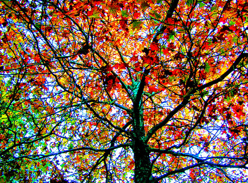 color tree red green light autumn fall plum island wildlife refuge newburyport ma usa america world universe space balck white hole birthday wedding rose flower flying car flickr best fav photoshop cs france dance cars northernlights flyingcars arizona roseflower trees flowers graveyard nature 08 party psdtuts colorful sky art twilight image stumbleupon interesting manipulated photo freeimage picasa favorite most getty stumbelupon facebook montage manipulate new buy views ishkolorkraft newsroom creative surreal avant guarde google pinterest