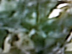 lcd tv close up
