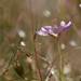 Camp Whittle:  Flora & Fauna